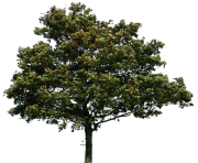 real tree simple png  clip art