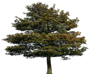 tree png 1380909751