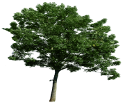 tree png 1380909809