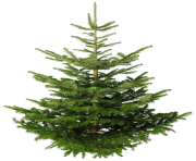 fir tree png transparent 2473
