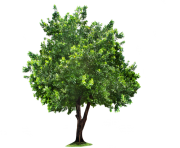 tree png 1380909746