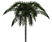 palm tree png image 2503