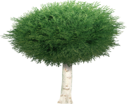 tree png 1380909507