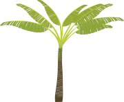 palm tree png image 2488