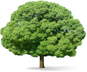 tree png 3470