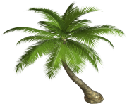 palm tree png image 2492