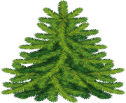 fir tree png transparent 2482