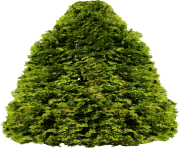 fir tree png transparent 2513