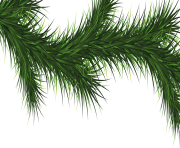 fir tree png transparent 3723