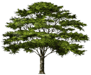 tree png 1380909977
