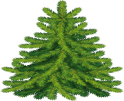 fir tree png transparent 3724