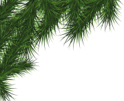 fir tree png transparent 3725