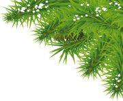 fir tree png transparent 3692