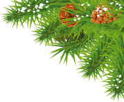 fir tree png transparent 3693
