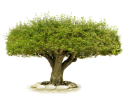 tree png 218