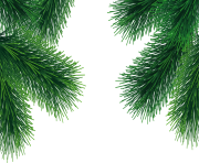 fir tree png transparent 3695