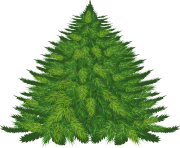 fir tree png transparent 2511