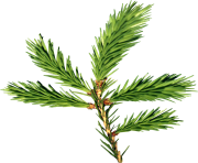 fir tree png transparent 3685
