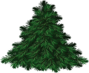 fir tree png transparent 3694