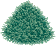 fir tree png transparent 2477