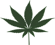 dark green marijuana leaf png vector