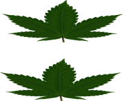 cannabis leaf png leaves for pasties hi
