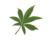 marijuana leaf cannabis hd png