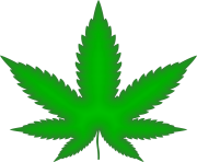 Marijuana Leaf Green Png Weed