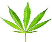 pot leaf png