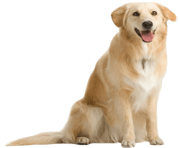 8 dog png image picture download dogs