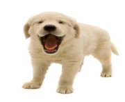 9 dog png image picture download dogs