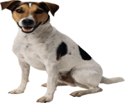 24 dog png image picture download dogs