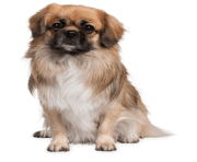 48 small puppy png image picture download dogs