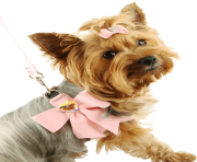 22 dog png image picture download dogs