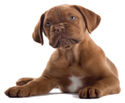 2 dog png image picture download dogs