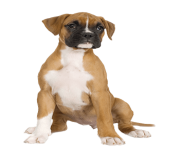 23 dog png image picture download dogs