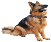 63 dog png image picture download dogs