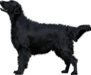 34 dog png image picture download dogs