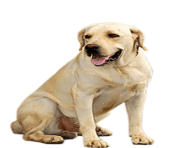 44 small puppy png image picture download dogs