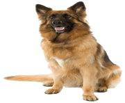 3 dog png image picture download dogs
