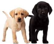 50 dog png image picture download dogs