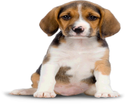31 dog png image picture download dogs