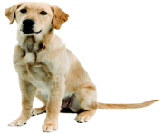 52 dog png image picture download dogs