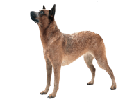 30 dog png image picture download dogs