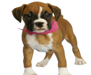 37 dog png image picture download dogs