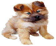 Puppy PNG Photos