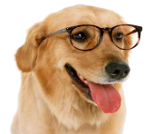 funny dog with glass png
