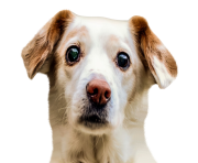 Dog Face PNG Image
