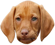 dog face png funny face