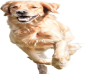 dog running png 4